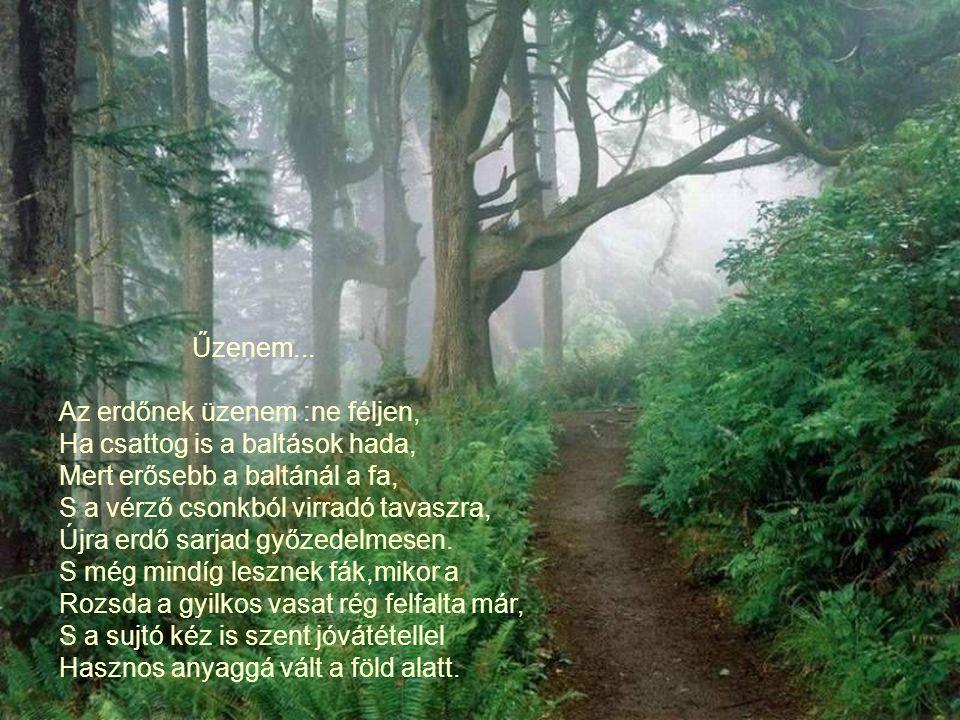 A könny... Ha a könny a gyöngy : A fagyöngyök az erdő könnyei, Parány könnyek,mozdulatlanok, Fák sudarára fagyott sóhajok, Az erdő gyöngybefagyott bán
