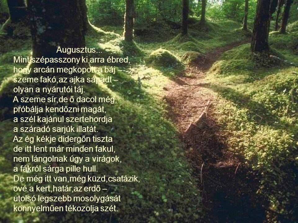Őszül az erdő... Tegnap százszínű, libegő láng volt, ma földszagú szél karjaiban táncolt. Holnap ha itt jársz, s felfelé nézel, elárvult nagy fák üzen