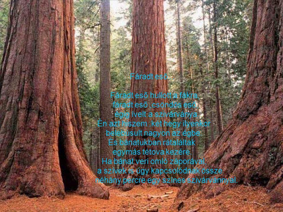 Az erdő... A hatalmas erdő bátran és délcegen állt, Nem merte senki számon kérni a hatalmát, Egy patak csörgedezve folyt át az erdőn, Szelíden,csendes