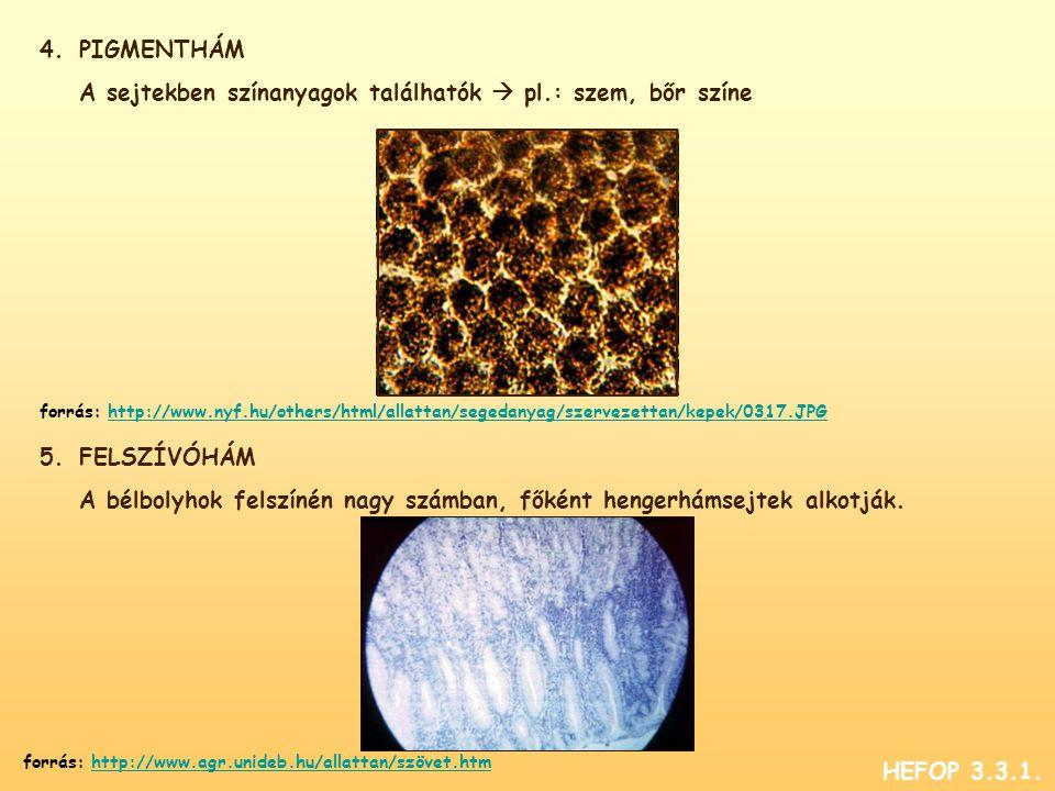 4.PIGMENTHÁM A sejtekben színanyagok találhatók  pl.: szem, bőr színe 5.FELSZÍVÓHÁM A bélbolyhok felszínén nagy számban, főként hengerhámsejtek alkotják.