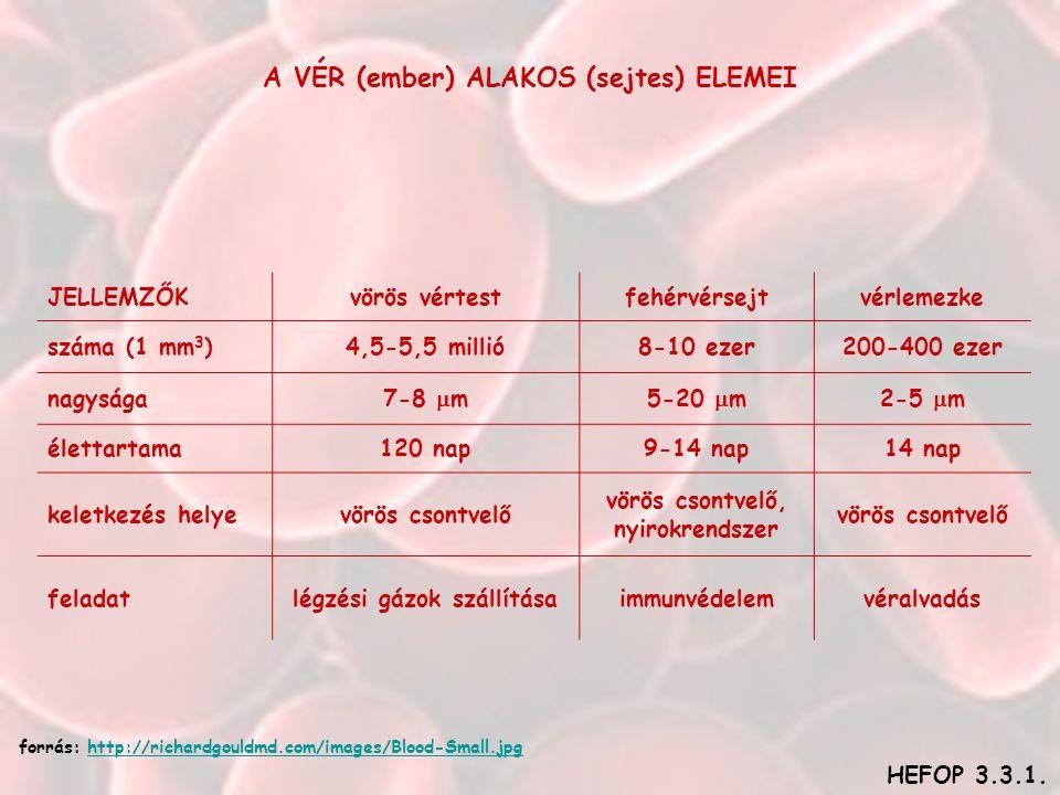 A VÉR (ember) ALAKOS (sejtes) ELEMEI JELLEMZŐKvörös vértestfehérvérsejtvérlemezke száma (1 mm 3 )4,5-5,5 millió8-10 ezer200-400 ezer nagysága7-8  m5-20  m2-5  m élettartama120 nap9-14 nap14 nap keletkezés helyevörös csontvelő vörös csontvelő, nyirokrendszer vörös csontvelő feladatlégzési gázok szállításaimmunvédelemvéralvadás HEFOP 3.3.1.