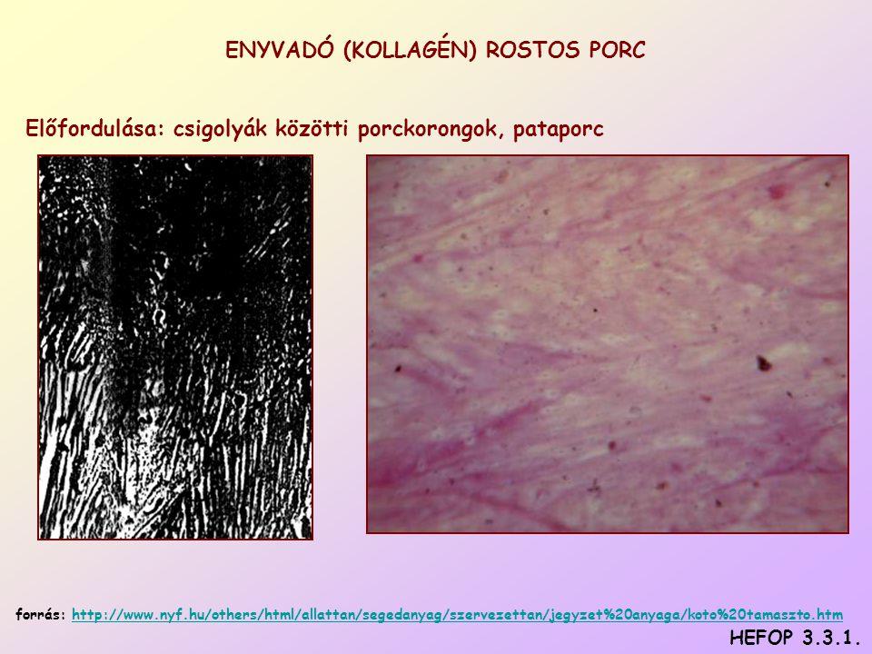 ENYVADÓ (KOLLAGÉN) ROSTOS PORC Előfordulása: csigolyák közötti porckorongok, pataporc HEFOP 3.3.1.