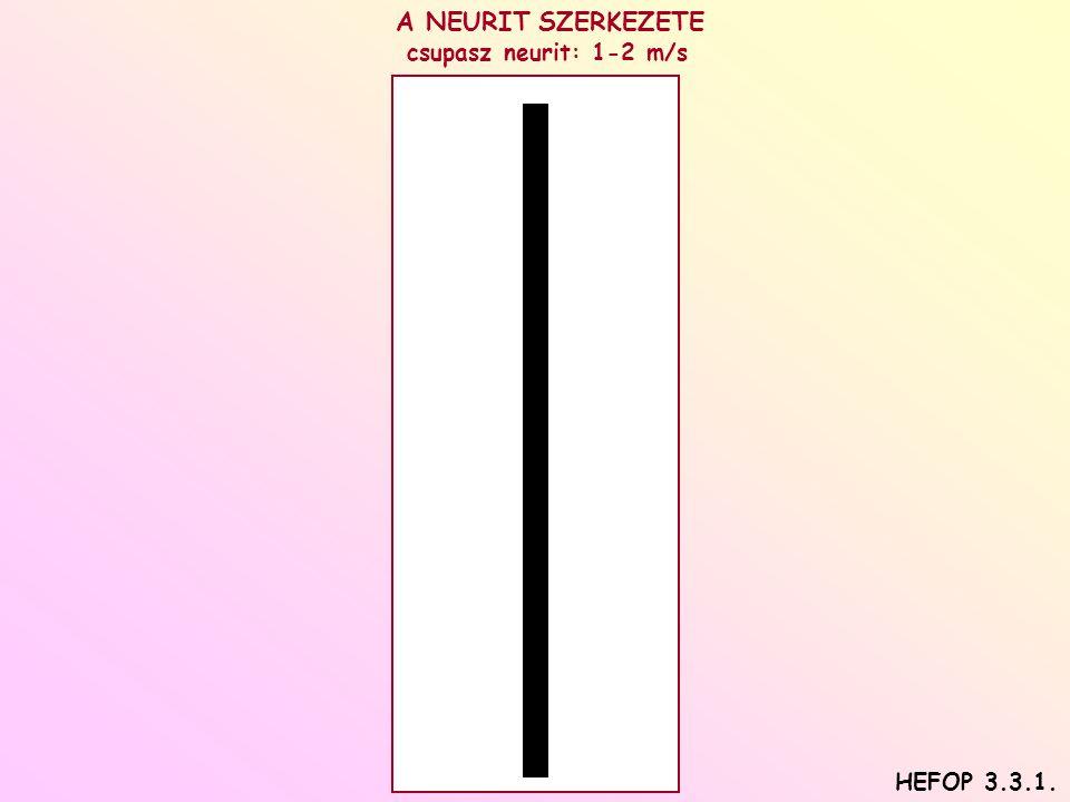 A NEURIT SZERKEZETE csupasz neurit: 1-2 m/s HEFOP 3.3.1.