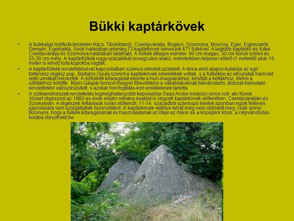 Rudabányai ősember maradványlelet • Rudabánya a Rudapithecus hungaricus lelőhelyeként ismert.