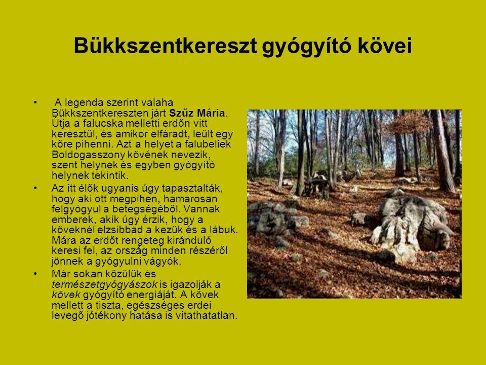 Sárospatak - Megyer-hegyi tengerszem • Magyarország egyik legkisebb védett területe szabadon látogatható.
