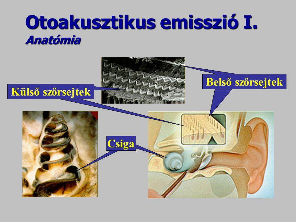 Otoakusztikus emisszió I. Anatómia csigaCsiga Külső szőrsejtek Belső szőrsejtek