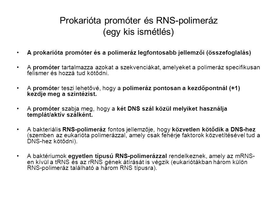 Prokarióta promóter és RNS-polimeráz (egy kis ismétlés) •A prokarióta promóter és a polimeráz legfontosabb jellemzői (összefoglalás) •A promóter tarta