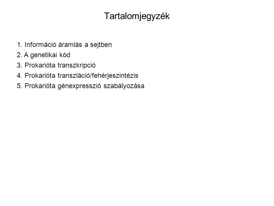 Tartalomjegyzék 1. Információ áramlás a sejtben 2. A genetikai kód 3. Prokarióta transzkripció 4. Prokarióta transzláció/fehérjeszintézis 5. Prokariót