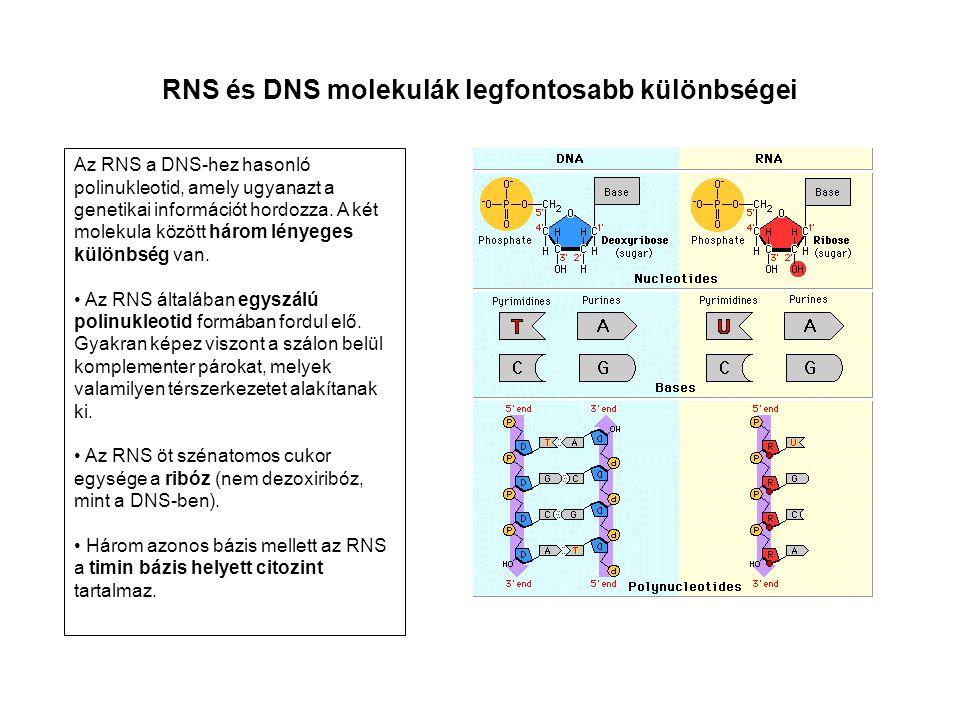 RNS és DNS molekulák legfontosabb különbségei Az RNS a DNS-hez hasonló polinukleotid, amely ugyanazt a genetikai információt hordozza. A két molekula