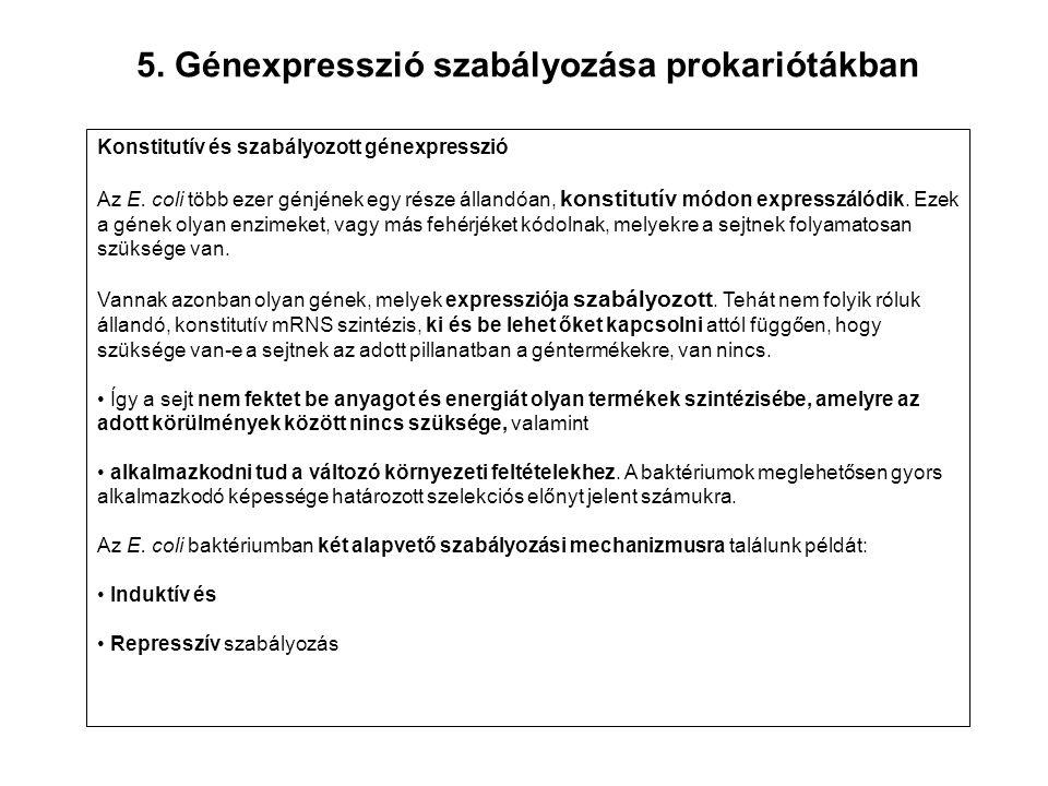 5. Génexpresszió szabályozása prokariótákban Konstitutív és szabályozott génexpresszió Az E. coli több ezer génjének egy része állandóan, konstitutív