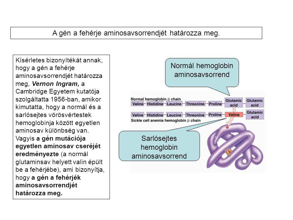 Kísérletes bizonyítékát annak, hogy a gén a fehérje aminosavsorrendjét határozza meg, Vernon Ingram, a Cambridge Egyetem kutatója szolgáltatta 1956-ba