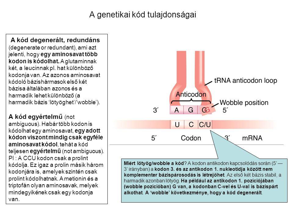 A genetikai kód tulajdonságai A kód degenerált, redundáns (degenerate or redundant), ami azt jelenti, hogy egy aminosavat több kodon is kódolhat. A gl