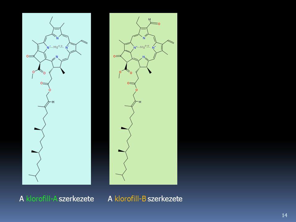 14 A klorofill-A szerkezeteA klorofill-B szerkezete
