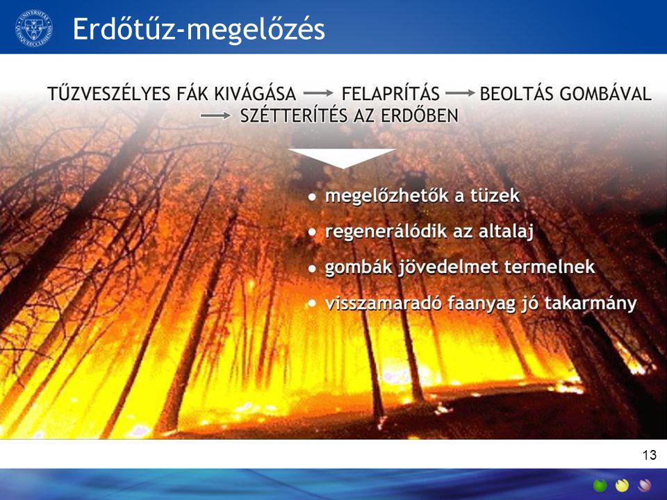Erdőtűz-megelőzés 13