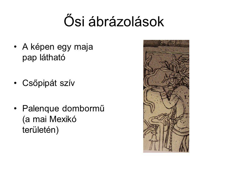 Ősi ábrázolások •A képen egy maja pap látható •Csőpipát szív •Palenque dombormű (a mai Mexikó területén)