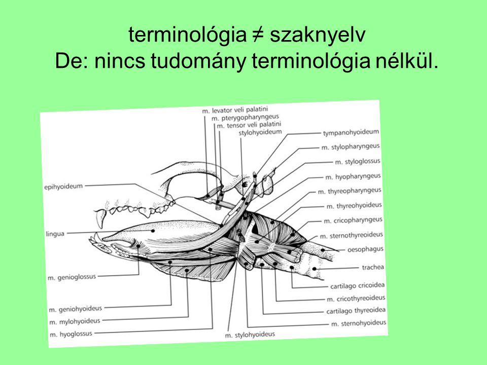 terminológia ≠ szaknyelv De: nincs tudomány terminológia nélkül.