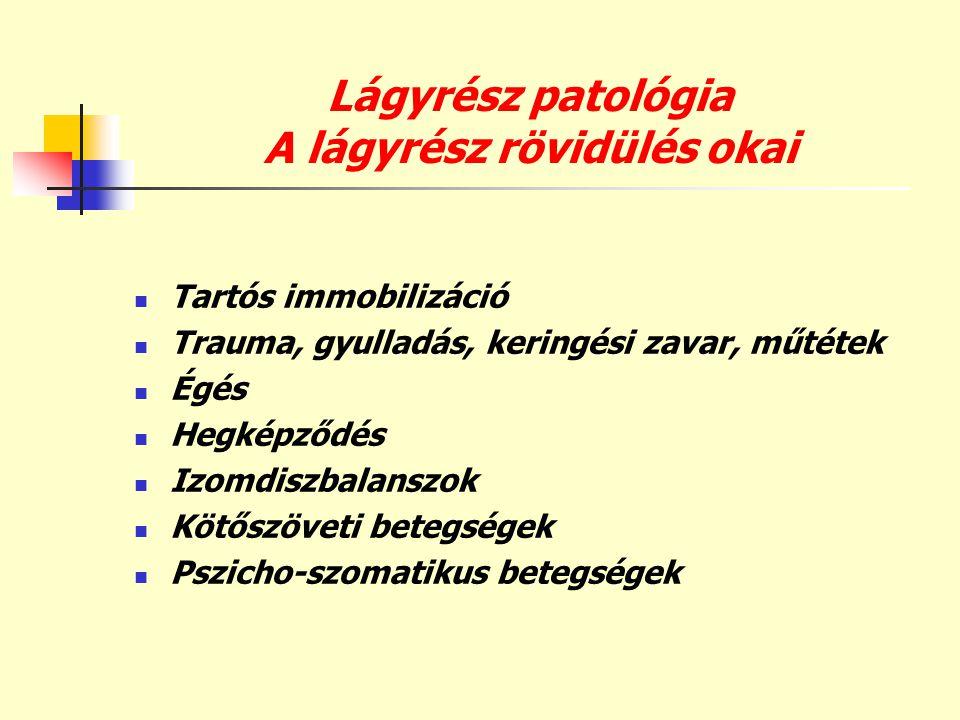 Lágyrész patológia A lágyrész rövidülés okai  Tartós immobilizáció  Trauma, gyulladás, keringési zavar, műtétek  Égés  Hegképződés  Izomdiszbalan