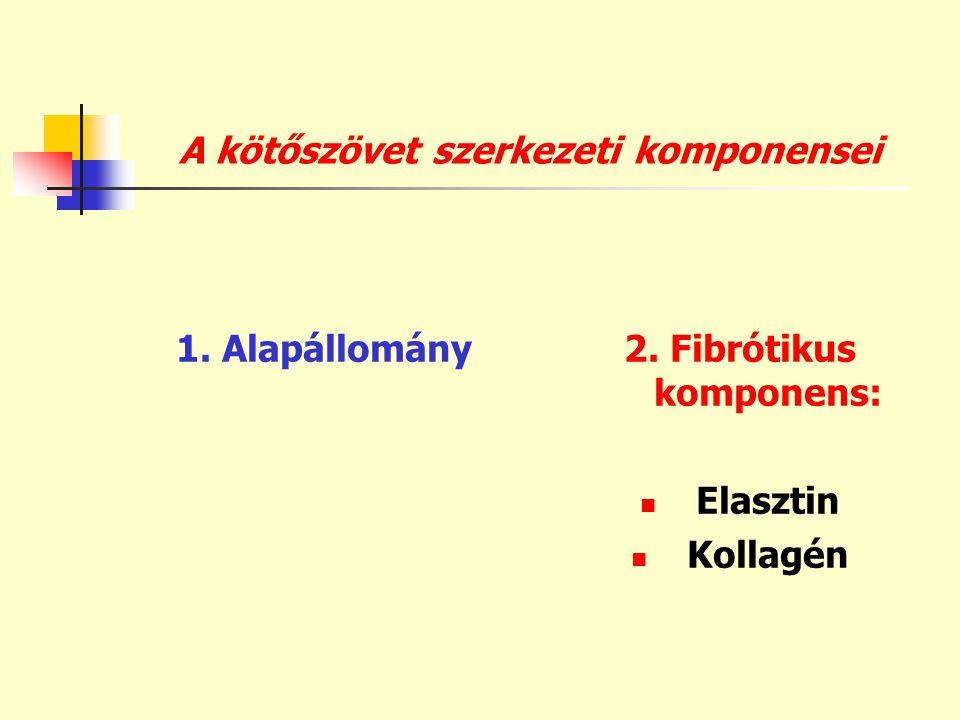 A kötőszövet szerkezeti komponensei 1. Alapállomány2. Fibrótikus komponens:  Elasztin  Kollagén