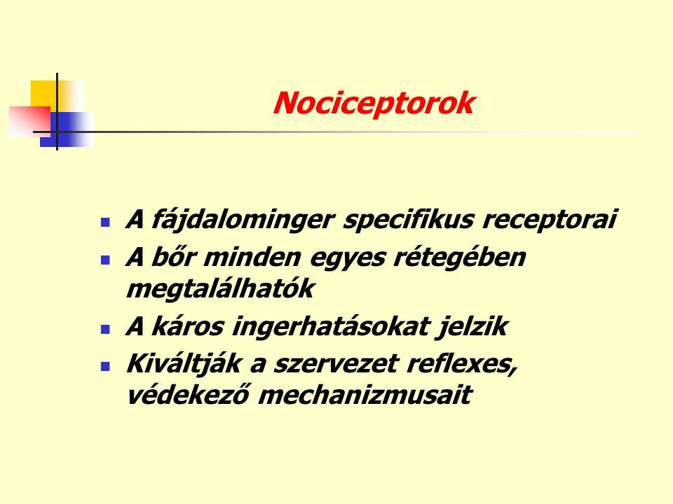 Nociceptorok  A fájdalominger specifikus receptorai  A bőr minden egyes rétegében megtalálhatók  A káros ingerhatásokat jelzik  Kiváltják a szerve