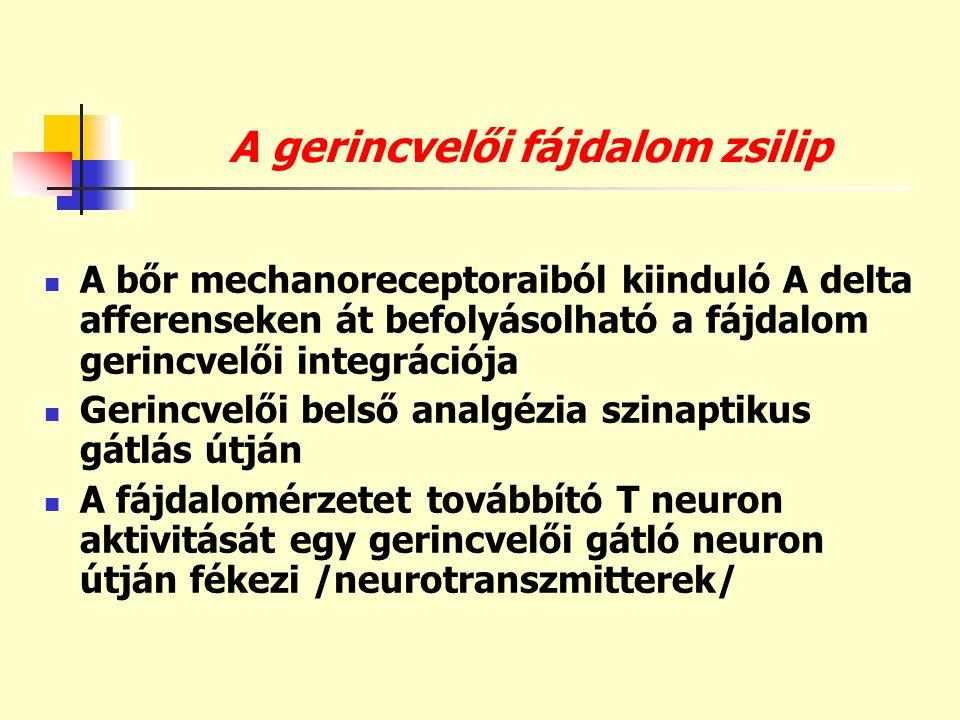 A gerincvelői fájdalom zsilip  A bőr mechanoreceptoraiból kiinduló A delta afferenseken át befolyásolható a fájdalom gerincvelői integrációja  Gerin