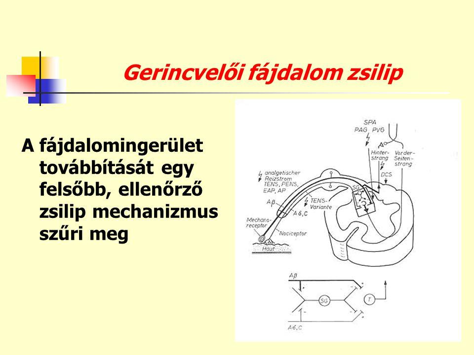 Gerincvelői fájdalom zsilip A fájdalomingerület továbbítását egy felsőbb, ellenőrző zsilip mechanizmus szűri meg