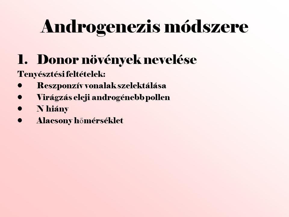 Androgenezis módszere 1.Donor növények nevelése Tenyésztési feltételek: •Reszponzív vonalak szelektálása •Virágzás eleji androgénebb pollen •N hiány •