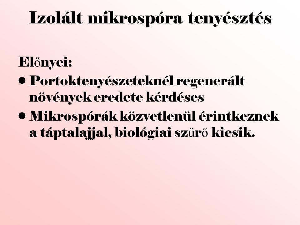 Izolált mikrospóra tenyésztés El ő nyei: •Portoktenyészeteknél regenerált növények eredete kérdéses •Mikrospórák közvetlenül érintkeznek a táptalajjal