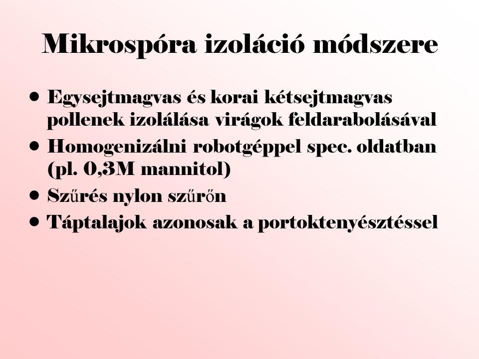Mikrospóra izoláció módszere •Egysejtmagvas és korai kétsejtmagvas pollenek izolálása virágok feldarabolásával •Homogenizálni robotgéppel spec. oldatb