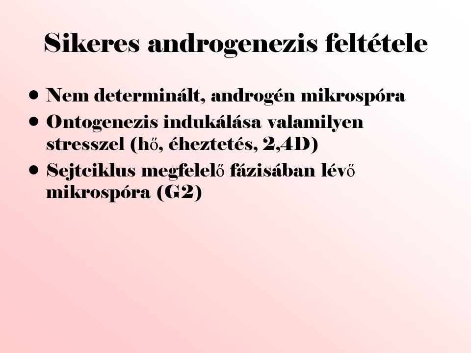 Sikeres androgenezis feltétele •Nem determinált, androgén mikrospóra •Ontogenezis indukálása valamilyen stresszel (h ő, éheztetés, 2,4D) •Sejtciklus m