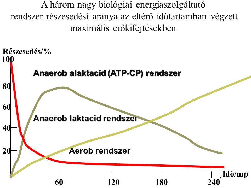A három nagy biológiai energiaszolgáltató rendszer részesedési aránya az eltérő időtartamban végzett maximális erőkifejtésekben Idő/mp Részesedés/% 60120180240 20 40 60 80 100 Anaerob alaktacid (ATP-CP) rendszer Anaerob laktacid rendszer Aerob rendszer