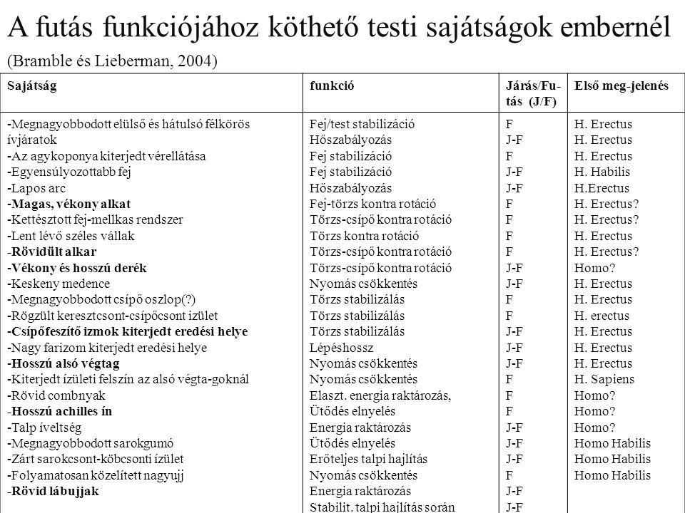 A FÁRADÁS A FÁRADÁS SZAKASZAI - ALAPMUNKABÍRÁS FÁZIS - KIEGYENLÍTETT FÁZIS - KIEGYENLÍTETLEN FÁZIS TELJESÍTMÉNY 100% ALAPMUNKABÍRÁS FÁZIS KIEGYENLÍTETT FÁZIS IDŐ KIEGYENLÍTETLEN FÁZIS EDZÉSADAPTÁCIÓ EREDMÉNYE 5' 15' 10'