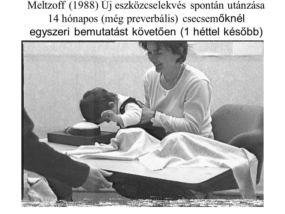 Meltzoff (1988) Új eszközcselekvés spontán utánzása 14 hónapos (még preverbális) csecsem őknél egyszeri bemutatást követően (1 héttel később)