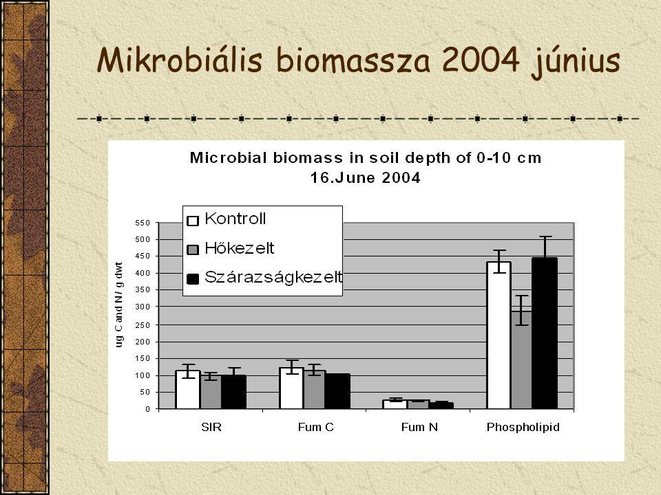 Mikrobiális biomassza 2004 június