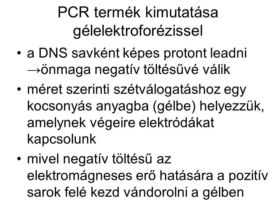 PCR termék kimutatása gélelektroforézissel •a DNS savként képes protont leadni →önmaga negatív töltésűvé válik •méret szerinti szétválogatáshoz egy kocsonyás anyagba (gélbe) helyezzük, amelynek végeire elektródákat kapcsolunk •mivel negatív töltésű az elektromágneses erő hatására a pozitív sarok felé kezd vándorolni a gélben
