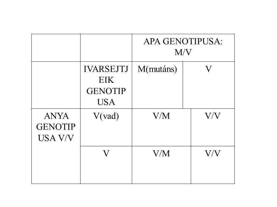 APA GENOTIPUSA: M/V IVARSEJTJ EIK GENOTIP USA M(mutáns)V ANYA GENOTIP USA V/V V(vad)V/MV/V VV/MV/V