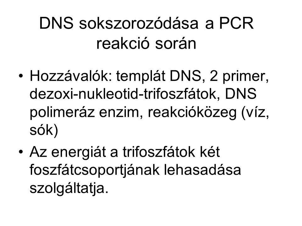DNS sokszorozódása a PCR reakció során •Hozzávalók: templát DNS, 2 primer, dezoxi-nukleotid-trifoszfátok, DNS polimeráz enzim, reakcióközeg (víz, sók) •Az energiát a trifoszfátok két foszfátcsoportjának lehasadása szolgáltatja.