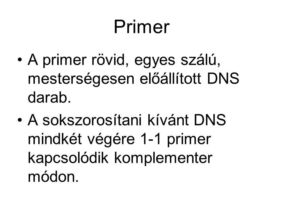 Primer •A primer rövid, egyes szálú, mesterségesen előállított DNS darab.