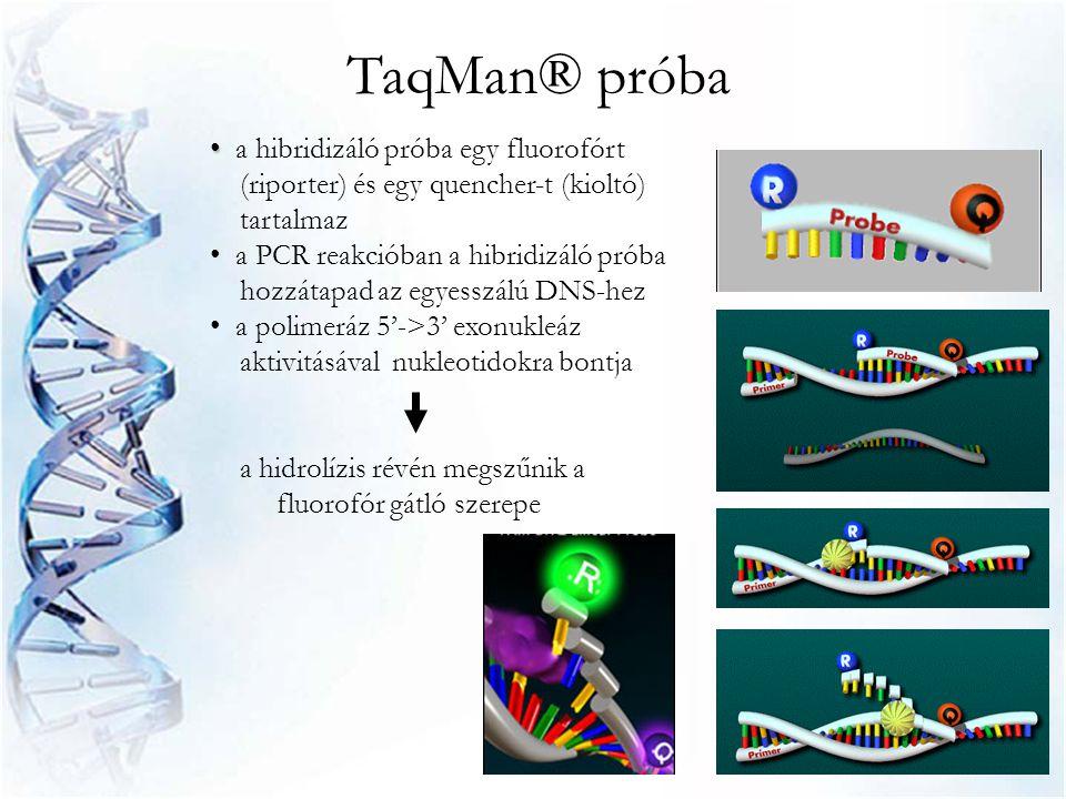 TaqMan® próba • • a hibridizáló próba egy fluorofórt (riporter) és egy quencher-t (kioltó) tartalmaz • a PCR reakcióban a hibridizáló próba hozzátapad
