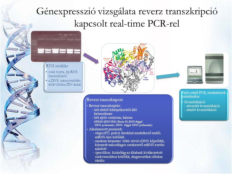 RNS izolálás •csak tiszta, ép RNS használható •a DNS szennyeződés eltávolítása DN-ázzal Reverz transzkripció • Reverz transzkriptáz: - két eltérő fehé