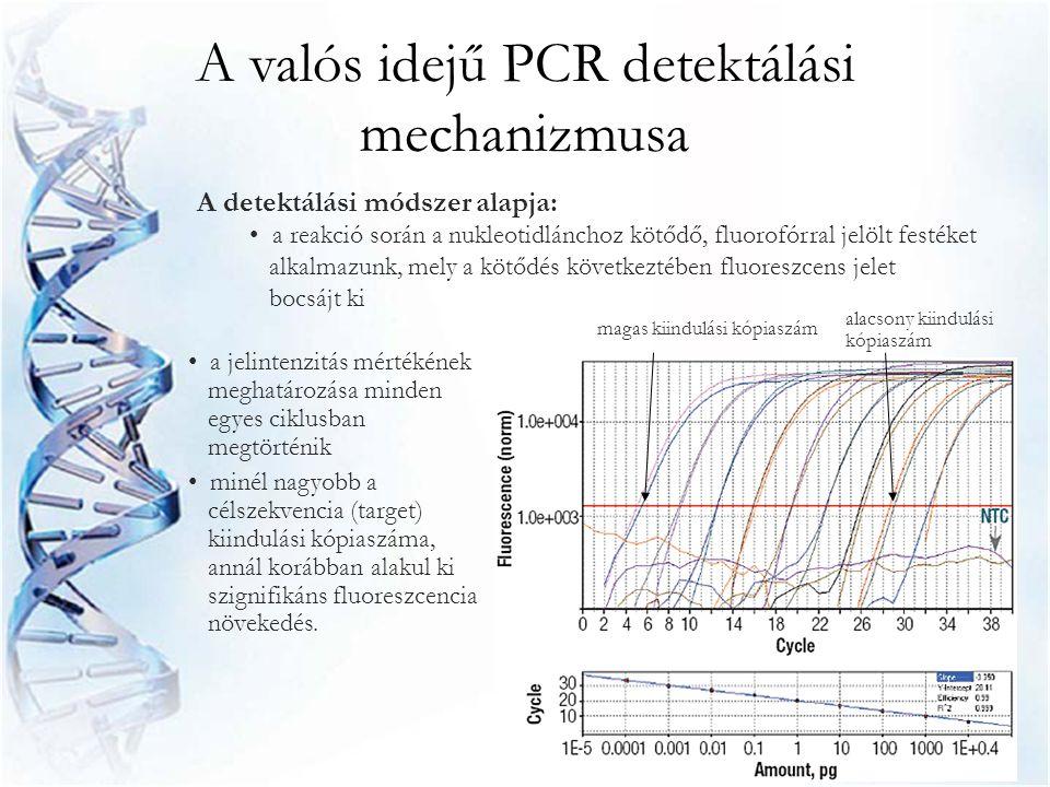 A valós idejű PCR amplifikációs görbéje Alapvonal – A PCR kezdeti ciklusaiban jellemző, ekkor még nem tapasztalható jelentős fluoreszcencia változás Threshold (küszöbérték) – manuálisan vagy automatikusan beállítható fluoreszcencia érték, az a fluoreszcencia mennyiség, melyet már jelentős változásnak tekintünk C T – (küszöb ciklus) az a ciklus, amelynél a mérhető fluoreszcencia mértéke először változik meg jelentős mértékben R n – a riporter festék által kibocsátott fluoreszcenciának a passzív referencia festékéhez viszonyított aránya ∆R n – a specifikus termék által generált jel nagysága (∆R n = R n – alapvonal) Exponenciális fázis, de nem detektálható jelintenzitás