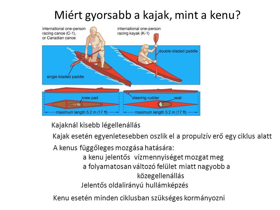 Miért gyorsabb a kajak, mint a kenu? Kajaknál kisebb légellenállás Kajak esetén egyenletesebben oszlik el a propulzív erő egy ciklus alatt A kenus füg