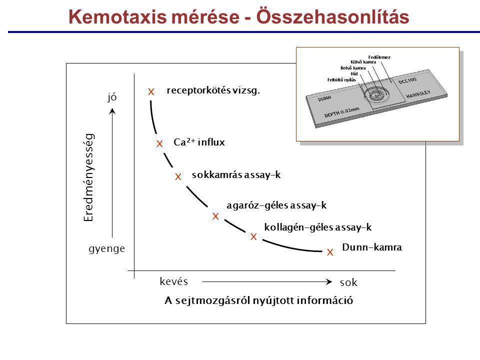 Kemotaxis mérése - Összehasonlítás x x x x x x receptorkötés vizsg. Ca 2+ influx Dunn-kamra sokkamrás assay-k agaróz-géles assay-k kollagén-géles assa