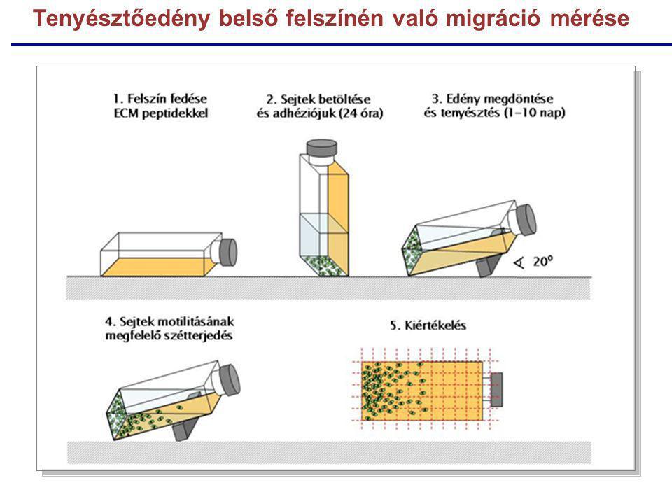 Tenyésztőedény belső felszínén való migráció mérése
