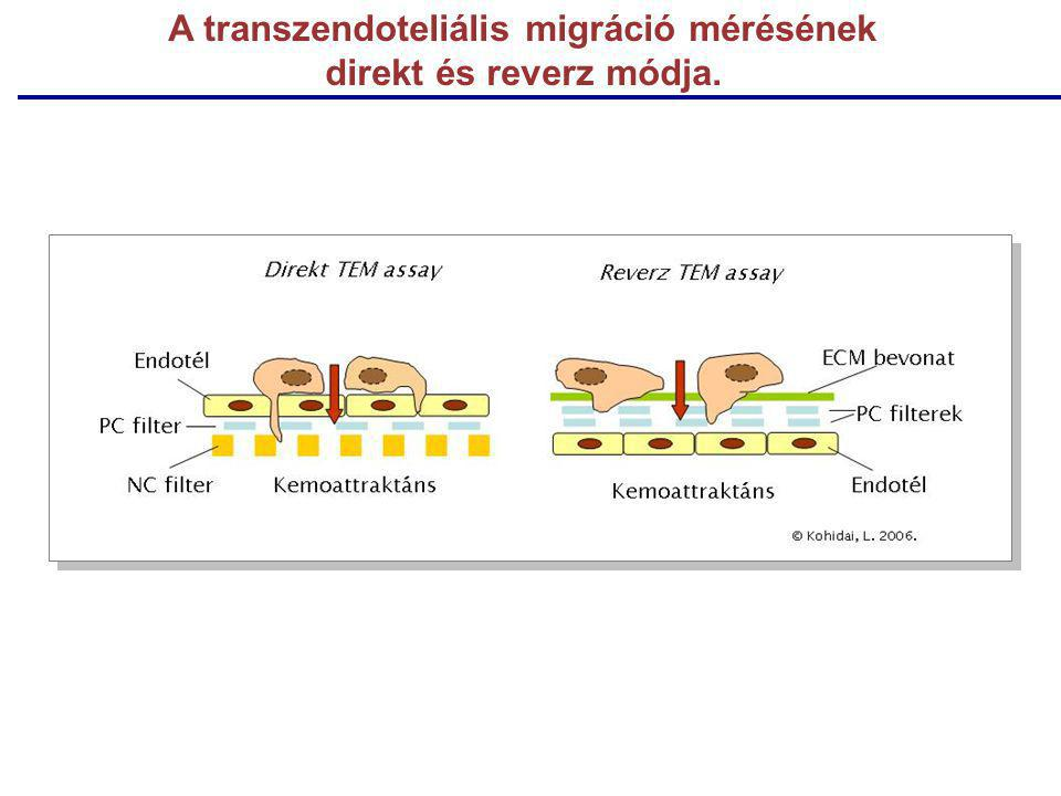 A transzendoteliális migráció mérésének direkt és reverz módja.