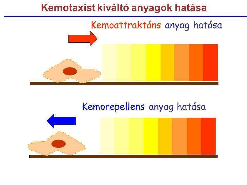 Kemoattraktáns anyag hatása Kemorepellens anyag hatása Kemotaxist kiváltó anyagok hatása