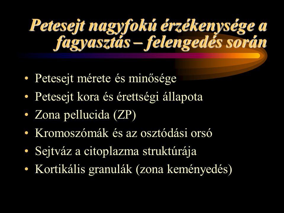 Petesejt nagyfokú érzékenysége a fagyasztás – felengedés során •Petesejt mérete és minősége •Petesejt kora és érettségi állapota •Zona pellucida (ZP)