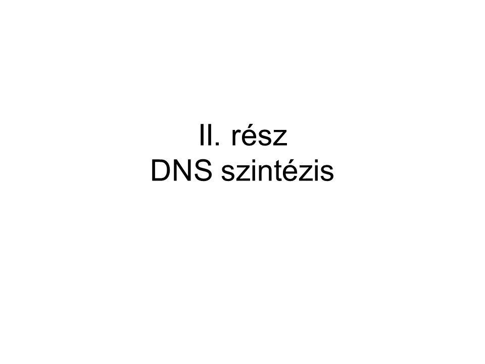 II. rész DNS szintézis