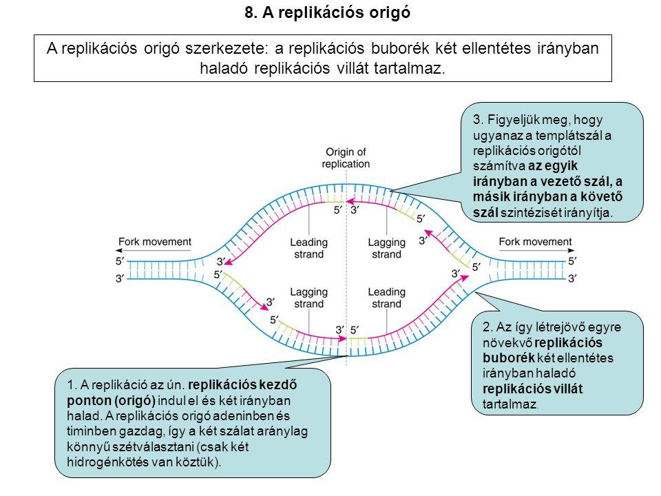 1.A replikáció az ún. replikációs kezdő ponton (origó) indul el és két irányban halad.