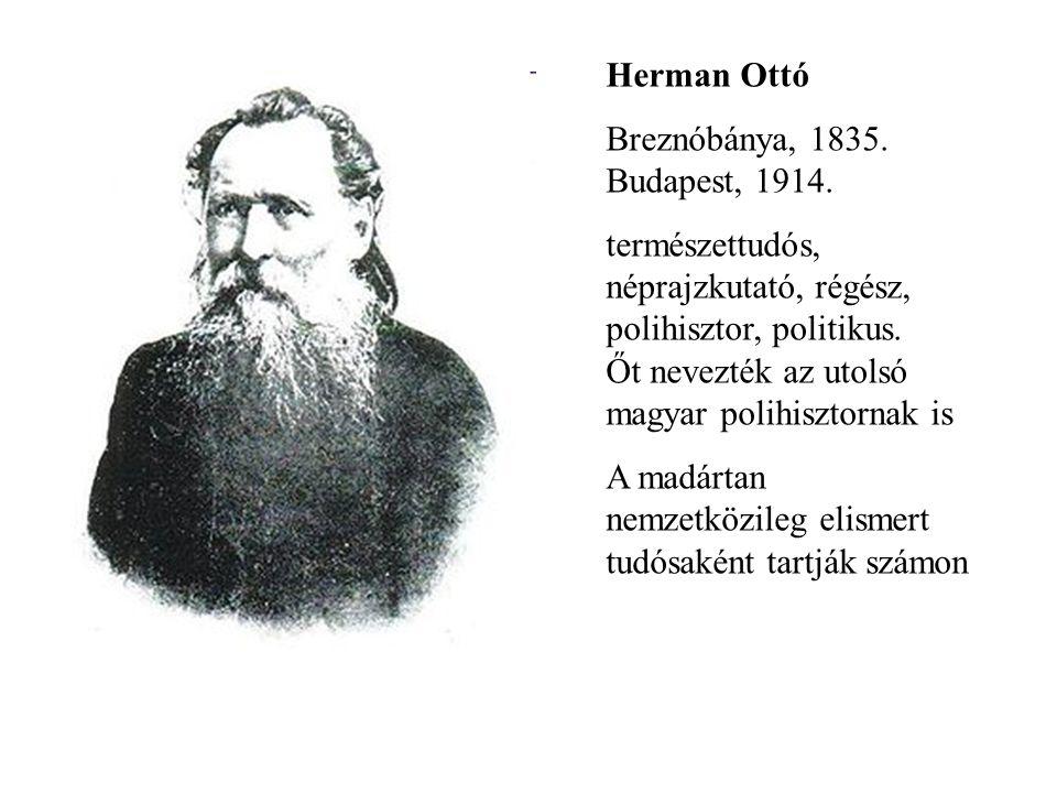 Herman Ottó Breznóbánya, 1835. Budapest, 1914. természettudós, néprajzkutató, régész, polihisztor, politikus. Őt nevezték az utolsó magyar polihisztor