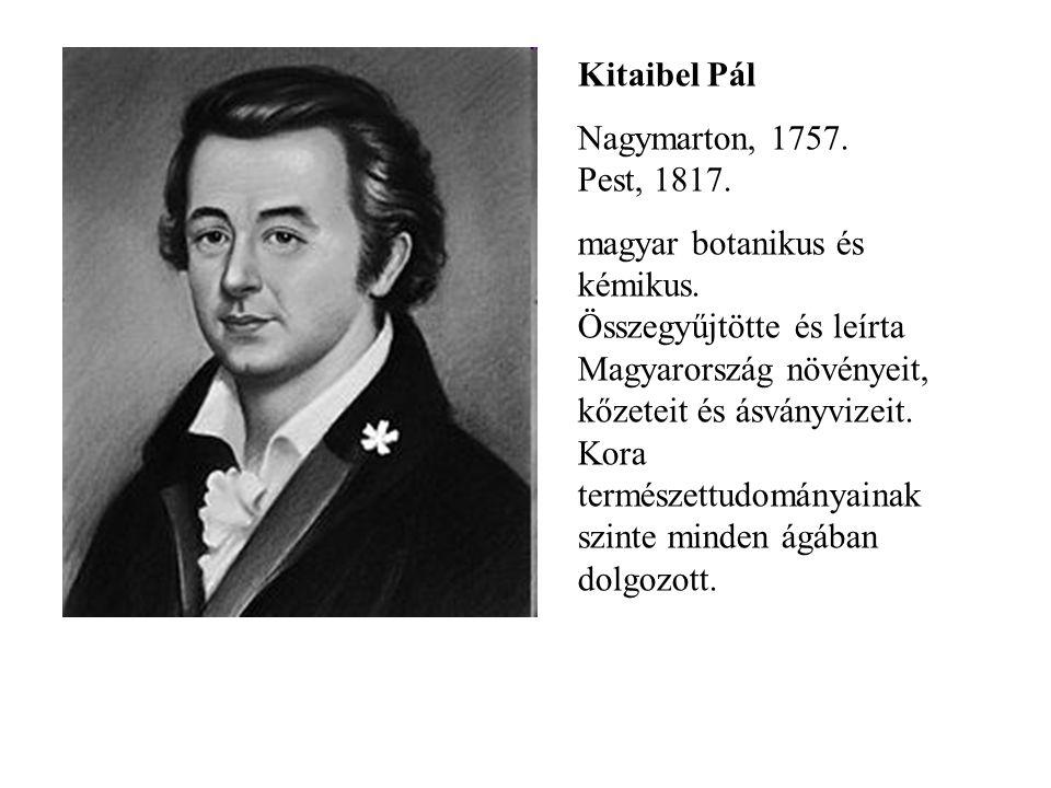 Kitaibel Pál Nagymarton, 1757. Pest, 1817. magyar botanikus és kémikus. Összegyűjtötte és leírta Magyarország növényeit, kőzeteit és ásványvizeit. Kor
